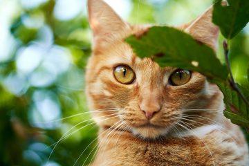 Festa nazionale del Gatto il 17 febbraio: tutto quello che c'è da sapere