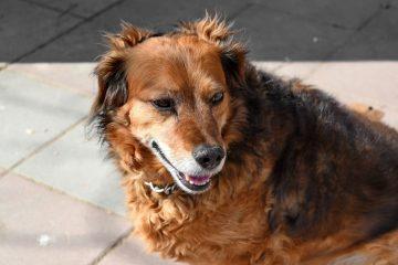 """""""Non usate la candeggina per disinfettare le zampe dei cani"""", l'appello dei veterinari"""