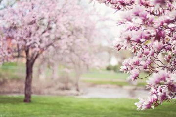Primavera 2020: perché l'equinozio è il 20 marzo e non il 21?