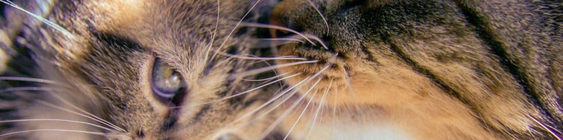 Indovinello del quadrato e dei gatti. Ragionamento e soluzione