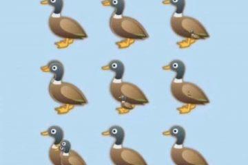 Quante papere vedete? Ragionamento e soluzione dell'indovinello
